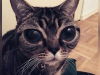 Matilda, Alien Cat, Yeux